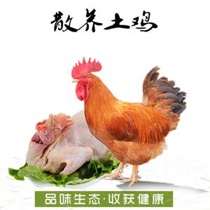 昌灵山农家散养土鸡